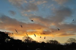 Birds flying above a nature reserve