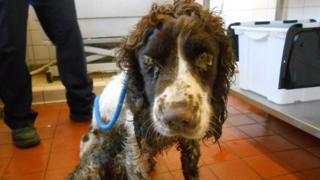 A dog was found dumped in Newport in December 2015
