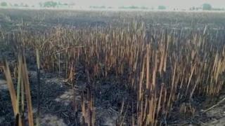 fire in fields