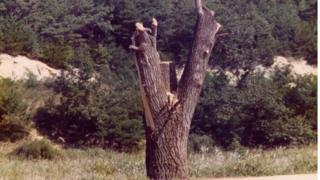 1976年,只剩下树干的杨树