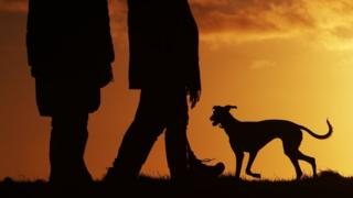Dog walking generic