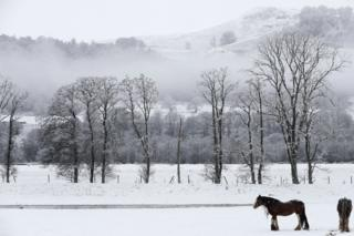 Horses in snow in Perthshire
