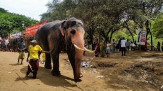 இலங்கை: தடுத்து வைக்கப்பட்டுள்ள 21 யானைகள் நீதிமன்றத்தினால் தற்காலிகமாக விடுவிப்பு