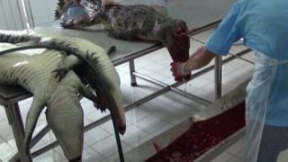PETA cho biết nhân viên điều tra đã ghé thăm một trang trại mà ở đó họ giam giữ hàng chục ngàn cá sấu