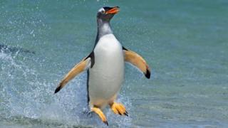 Субантарктичний