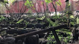 The overgrown seating