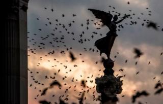 Burung terbang
