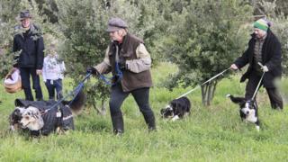 Truffle hunting in rural Victoria, Australia