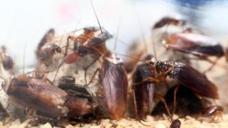 picture of cockroaches playing in a cave.