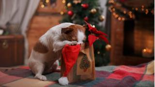 Cachorros xereta em uma embalagem de presente de Natal