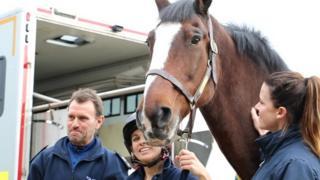 Redland at HorseWorld, Bristol