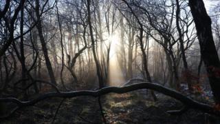 woodlands in Kilsyth