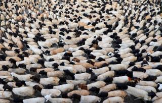 Sheep are seen at a livestock market ahead of the Eid al-Adha festival in Mogadishu, Somalia, on 10 August.