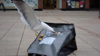 Gull proof bag