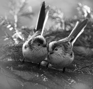 Two small birds huddle together