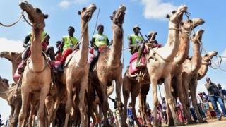 Participants wait the start of the 21 kilometers professional camel race during the 29th edition of Maralal International Camel Derby at Maralal, Samburu County, Northern Kenya on September 2, 2018. - The event held annually, which aims at promoting sports and cultural tourism, is Kenya