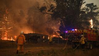 آتش نشانان در حال تلاش برای خاموش کردن آتش در یک مزرعه در روز ۱۲ دسامبر