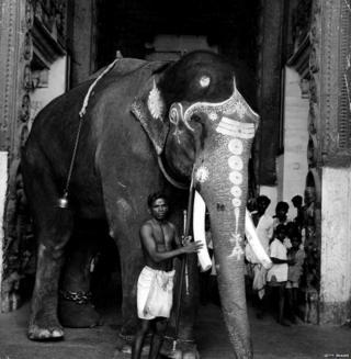 हाथी, मौत, जानवर, तमिलनाडु