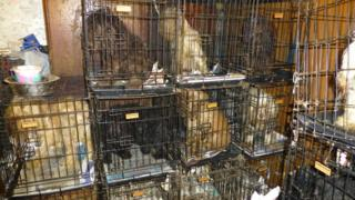 Several different breeds of dog in cages