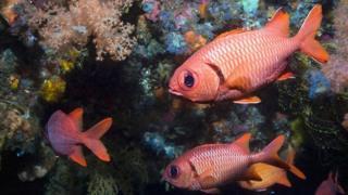 अभी कुछ शोध ही पूरे हुए हैं लिहाजा गहरे समुद्र में खनन की पर्यावरण पर पड़ने वाले असर की बहुत कम समझ है