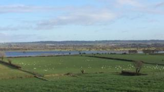 Whooper swans at Lough Beg