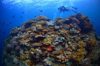 """A coral """"bommie"""" off the Wakatobi Islands, Sulawesi, Indonesia"""