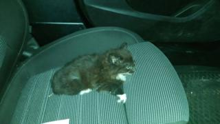 Officers posted a photo of the injured kitten on the PSNI Armagh Facebook page