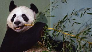 panda-edinburgh.