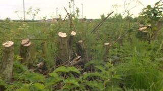 Felled trees in Newcastle
