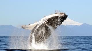 science humpback