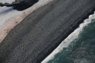 Seals on a beach in a photo seen from above