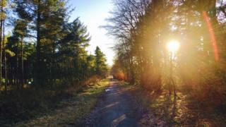 Canada Wood, Falkirk