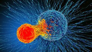 Т-лімфоцит атакує ракову клітину
