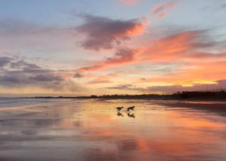 Dogs on beach at sunset