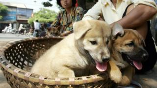Two women sit selling young dogs at a roadside in downtown Hanoi 11 October 2005