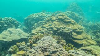 Arrecife de Varadero