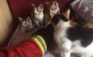 Cat and kittens and a firefighter's arm