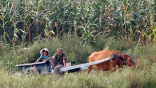 新義州鴨綠江畔一對老夫婦乘坐牛車而過(9/9/2017)