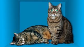 Ilustración de un gato vivo y muerto en referencia a la paradoja de Schrödinger