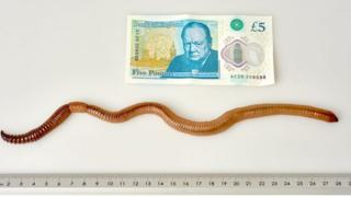 Dave the worm