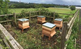 Beehives in Gateshead