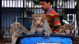Do nipah ao coronavírus: destruição da natureza expõe ser humano a doenças do mundo animal