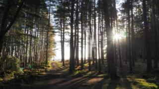 Sun splitting the trees