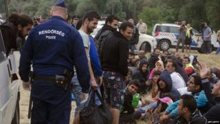 Police collects migrants at the Hungarian-Serbian border on 24 June 2015 during their patrol.