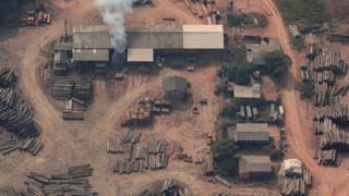 Aerial view of suspected illegal logging site (Reuters)