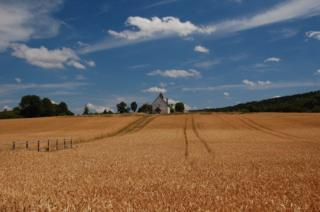 Fields before harvest