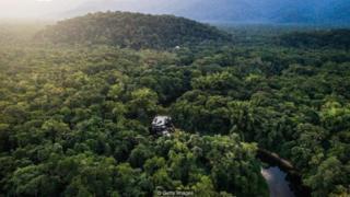 Bagaimana caranya mengambalikan hutan yang telah rusak?