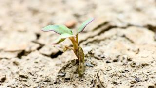 செவ்வாய் கிரகத்தில் உயிர் வாழ முடியும், 32,000 ஆண்டுகள் ஆயுட்காலம் - உலகின் கடினமான தாவரங்கள்