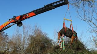 Horse being rescued in Windsor