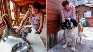 A composite photo of Valerie Luycx with Calin the cat and Yam the nine-year-old Saint Bernard dog poses for a portrait